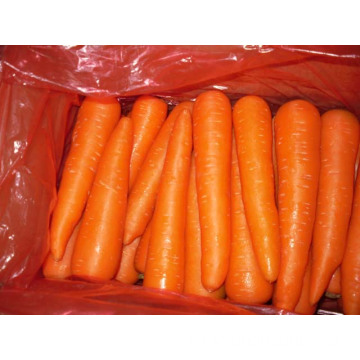 Different Sizes Different Weights Fresh Carrot